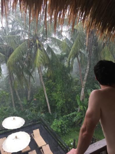 bali rainforest